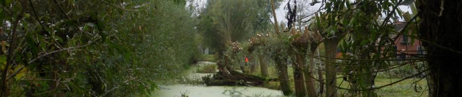IMGP7027 (Noordzijdseweg te Polsbroek)